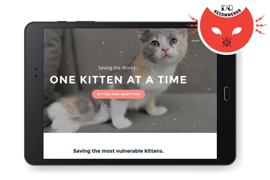 Saving Grace Kitten Rescue