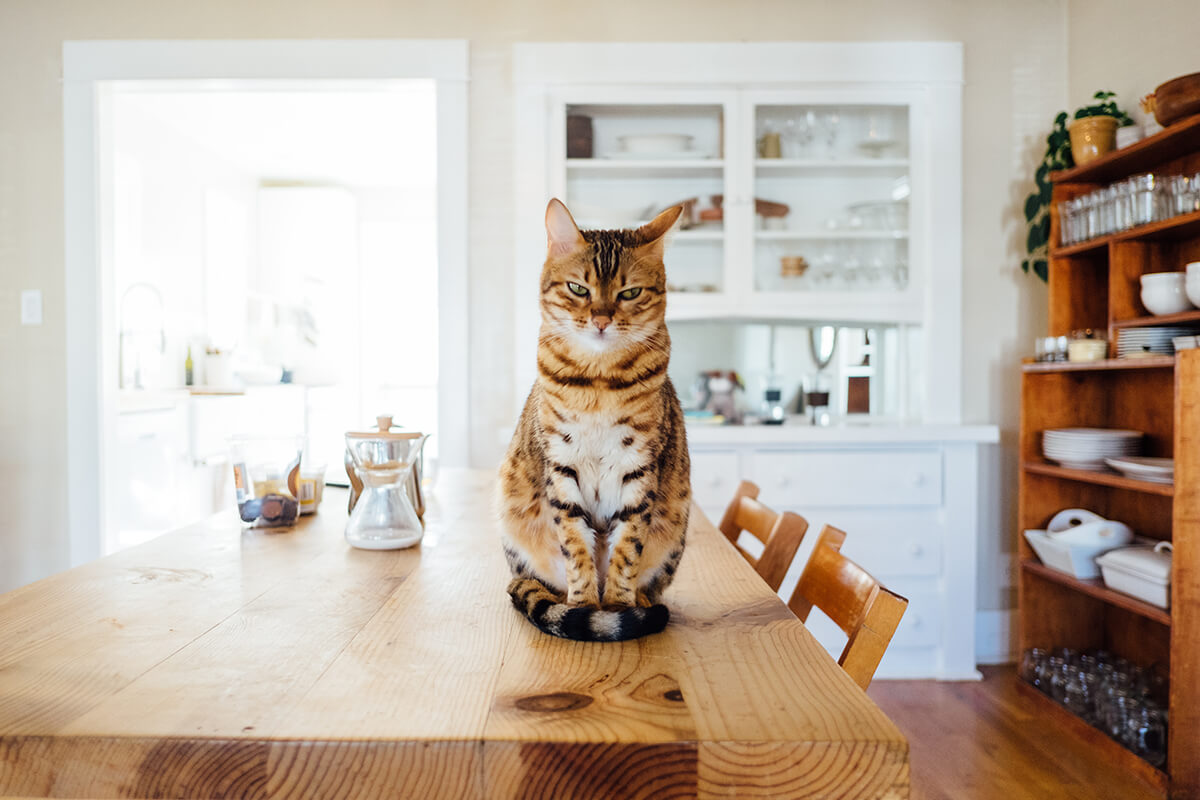 dangers of cat declawing