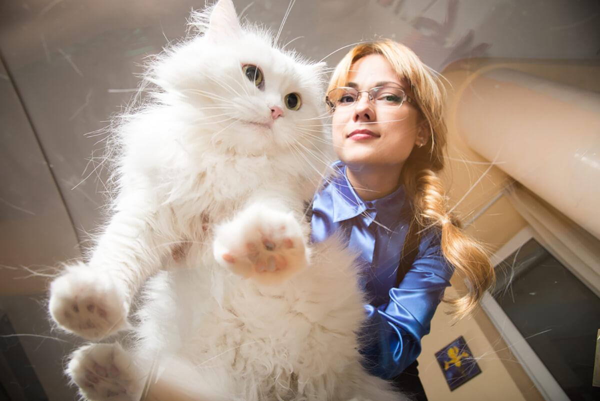 Cat Elevator Butt