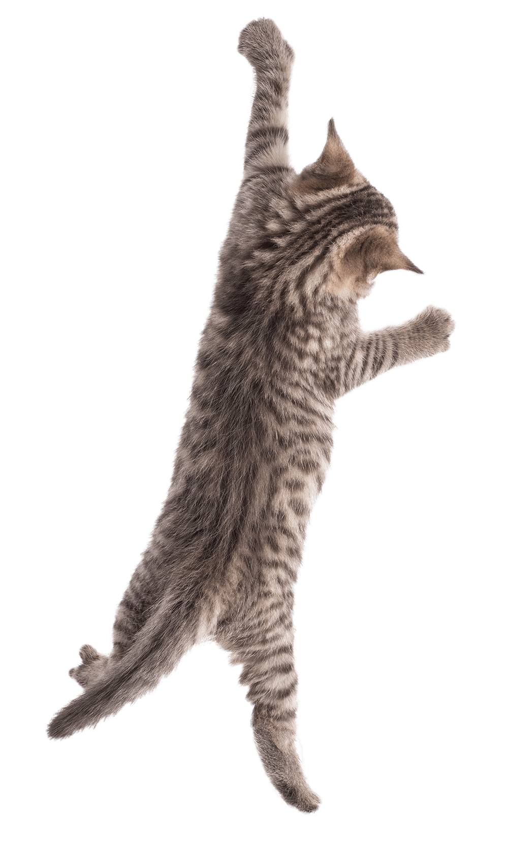 Purrvana Cat