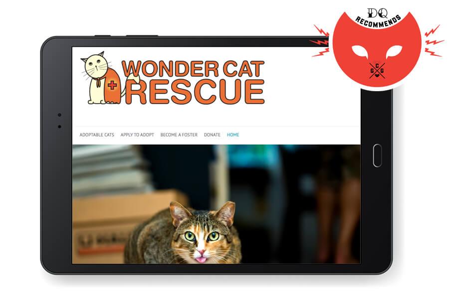 wonder cat rescue